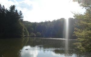 foresta umbra_1